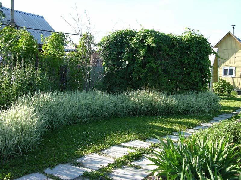 Декоративные травы Белого сада